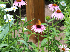 Butterfly_IMG_3205