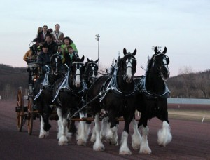 Clydesdales_7534